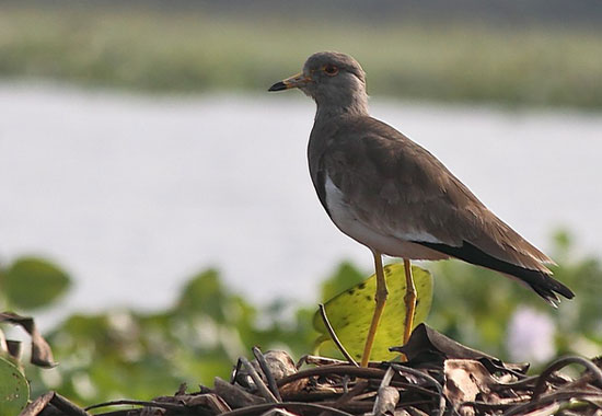 Rasikbill Bird Sanctuary